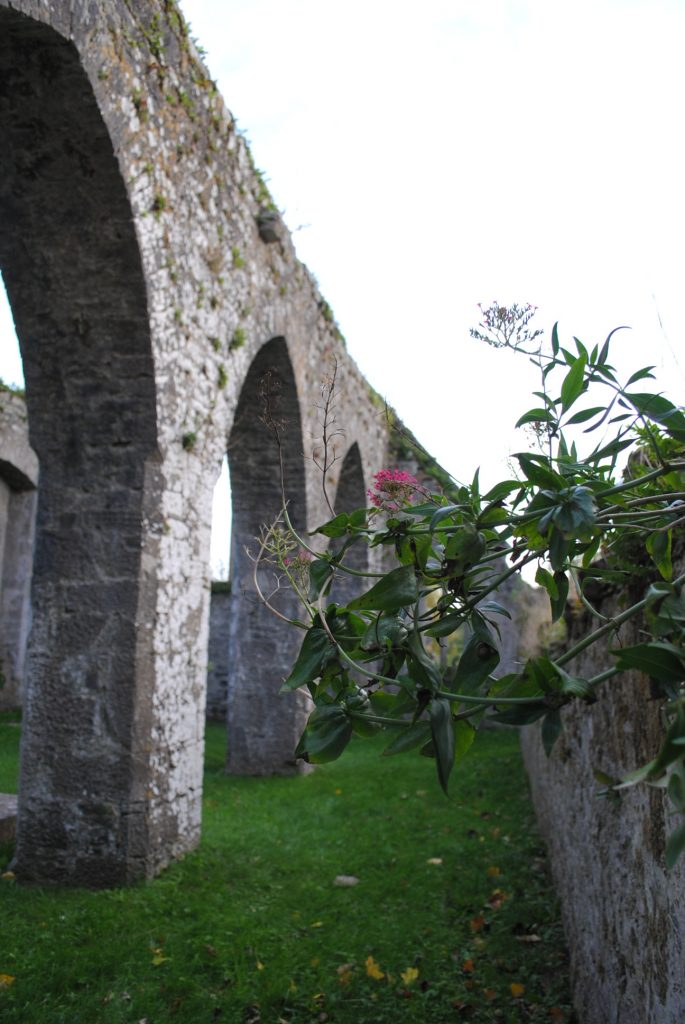 Ireland-Abbey-Church-Ruins-on-a-golfcourse-on-the-way-to-Limerick-23