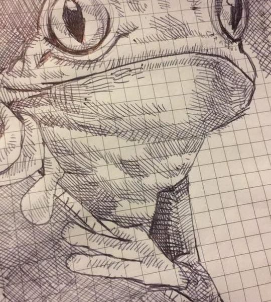Frog Drawing With Ball Point Pen Ryanjlima (2)